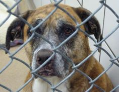 Eva, 12-1-16 SL!!!, this baby is sponsored! Please can't someone give this sad soul a loving home!!!