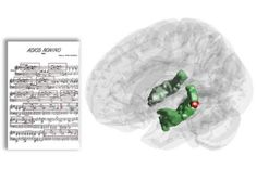 For the first time the hippocampus—a brain structure crucial for creating long-lasting memories—has been observed to be active in response to recurring musical phrases while listening to music. Thus, the hippocampal involvement in long-term memory may be less specific than previously thought, indicating that short and long-term memory processes may depend on each other after all.