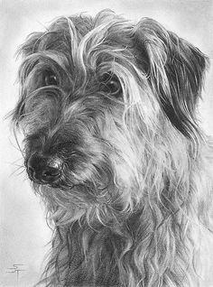 Imagen de dibujos de perros a lapiz