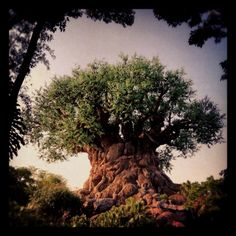 The Tree of Life at Disneys Animal Kingdom. One of my favorite places
