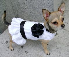 Truly tiny Pet Fashion and Patterns too Crochet Dog Sweater Free Pattern, Crochet Dog Patterns, Knit Dog Sweater, Dog Sweaters, Yorkie Clothes, Pet Clothes, Dog Christmas Clothes, Crochet Dog Clothes, Large Dog Clothes