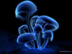 Google Image Result for http://melonmeister.bravehost.com/myPictures/mushrooms.jpg