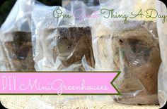 DIY Mini Greenhouses!