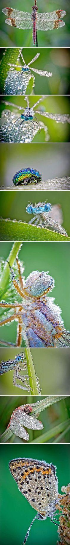 insectes apres la pluie