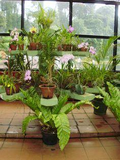 Botanical Gardens, Plants, Flora, Plant
