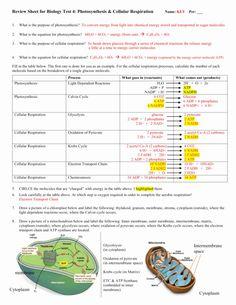 Photosynthesis Worksheet Answer Key Luxury Cellular ...