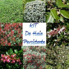 1000 id er om haie persistant p pinterest arbuste haie rhododendron og erable du japon. Black Bedroom Furniture Sets. Home Design Ideas
