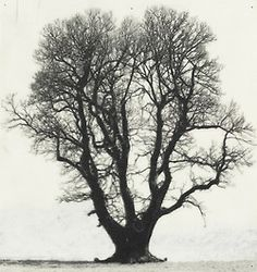 Patrick Van Caeckenbergh (Belg. 1960- ), Drawings of Old Trees (summer 2010), 2010, 1/3 panneaux (18,5 x 28,6) + (20,2 x 19,2) + (27,3 x 17,0) cm, crayon Pentel 120 3DX - 0,5 mm A315 sur papier