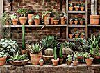 Jardinagem bem fácil: como cuidar de cactos, suculentas e agaves | Casa