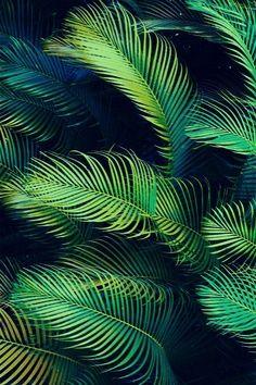 blue green palms