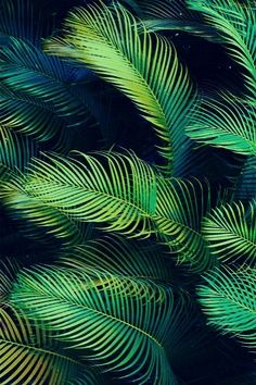 blue green palms