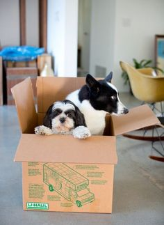 Dogs Love Boxes Too   Cutest Paw