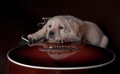 Cute music puppy!