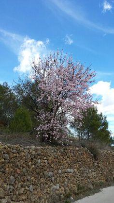 Spring has nearly sprung, goodbye winter.
