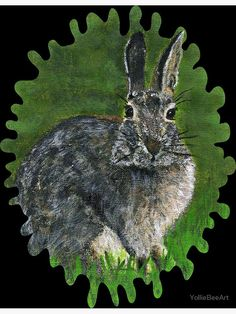 """""""Wild Cottontail Bunny"""" Postcard by YollieBeeArt   Redbubble"""