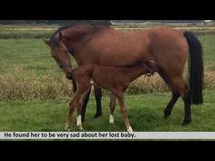 Doctors Introduce A Mother Horse Who Lost Her Baby To A Baby Horse Who Lost Her Mother - YouTube