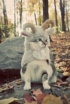 OMG it's a cat dressed as a sheep for Halloween.