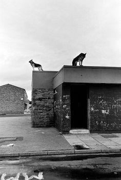 Peter Marlow Magnum Photos Photographer Portfolio