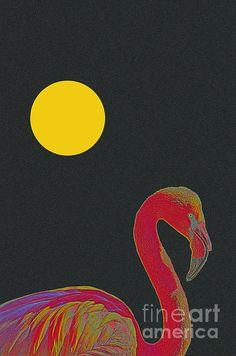 American Pink Flamingo