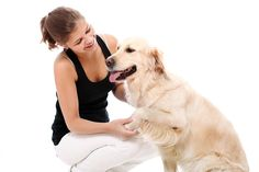 Massaggiare il cane oltre ad essere un ottimo metodo per calmare e rilassare il nostro quattro zampe, è un modo efficace per aumentarne il benessere fisico