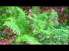 Sorinel Ghita-Ballad for You - YouTube