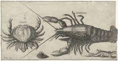 Pierre Firens | Kreeft, krab, salamander en een schelp, Pierre Firens, Adriaen Collaert, 1600 - 1638 |