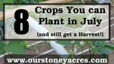 What can you plant in July and still get a harvest?. >> Have a look at more at the image link