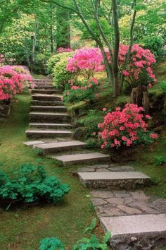 Stone and concrete steps with moss and pink azaleas through the woodland.