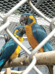 Canadian Parrots Heading for the Wilds of Bolivia: