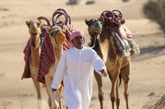 The Bedouin and his camels.