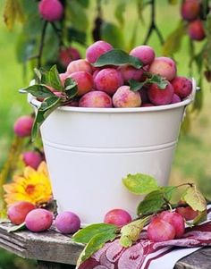 Plums. I love plums. That's right ~ buckets and buckets of 'em :+) #food #fruit #plums