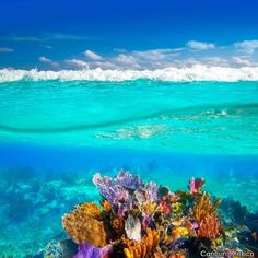 Cancun's Great Maya Reef is the second largest barrier reef in the world