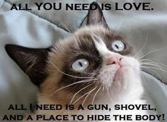 Grumpy cat quotes, grouchy quotes, grumpy cat jokes, grumpy cat humor, grumpy cat pictures …For more hilarious quotes and jokes funny visit www. Grumpy Cat Quotes, Cat Jokes, Grumpy Cat Humor, Grumpy Kitty, Grump Cat, Dog Cat, Funny Cats, Funny Animals, Matou