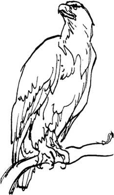 Bald Eagle Drawings Capturing The Magic Of A National Symbol