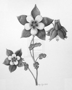 Columbine Flower by Scheheraz-Odd.deviantart.com on @deviantART