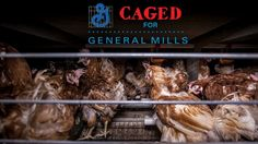 Petition · General Mills: Stop Supporting Farms that Cage Hens · Change.org