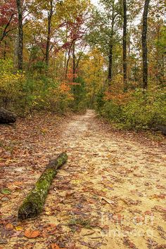 Forest Bathing....spending time in the forest to immerse yourself in the lush colors of the waning leaves.