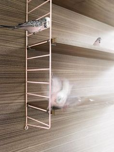 string soft powder - limited edition. powder pink side panels and oiled walnut shelves
