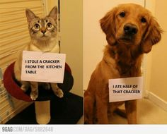 Naughty cat and dog