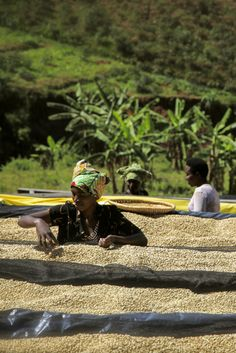 Market Lane Coffee - Nyarusiza RWANDA - Nyamagabe