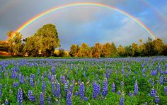 Spring's Promise by Lynn Bauer Pot Of Gold, In My Feelings, Wild Flowers, Fine Art America, Scene, Rainbows, Nature, Artist, Pictures