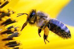 Bienen Wie Sie Informationen Digital Weitergeben Bienen Diy