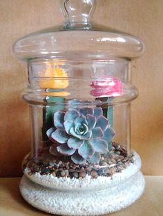 Cactus, Terrariums, Snow Globes, Jar, Home Decor, Succulents, Prickly Pear Cactus, Terrarium, Homemade Home Decor
