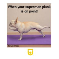 When your superman plank is on point! How cute is this funny gym meme of a dog planking. Work planks in to your fitness routine for a rocking core!
