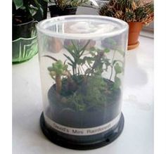 Old CD Spindle case to terrarium or mini-greenhouse. Great bit of recycling and use of materials you tend to keep but never know how to use. Diy Mini Greenhouse, Homemade Greenhouse, Greenhouse Plans, Greenhouse Wedding, Miniature Greenhouse, Cheap Greenhouse, Backyard Greenhouse, Container Gardening, Gardening Tips