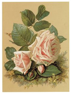 .Victorian peach pink roses perhaps by Catherine Klien or Paul de Longpre