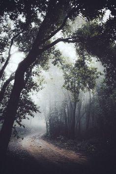 Nature : Photo