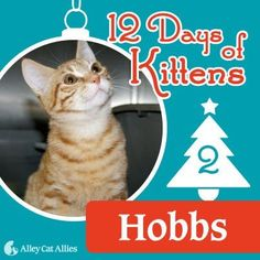 an idea for posters this xmas.. Alley Cat Allies -- 12 Days of Kittens