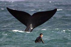 #surf #whale #impressive