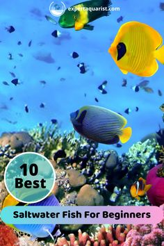Keeping that in mind, we bring you this article where we talk about the different fishes that are best for saltwater aquariums. So without any further ado, let us get into it. Saltwater Aquarium Beginner, Saltwater Aquarium Fish, Saltwater Tank, Freshwater Aquarium, Saltwater Fishing, Reef Aquarium, Marine Aquarium, Marine Fish, Fishing For Beginners